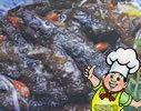 枸杞燒海參的做法